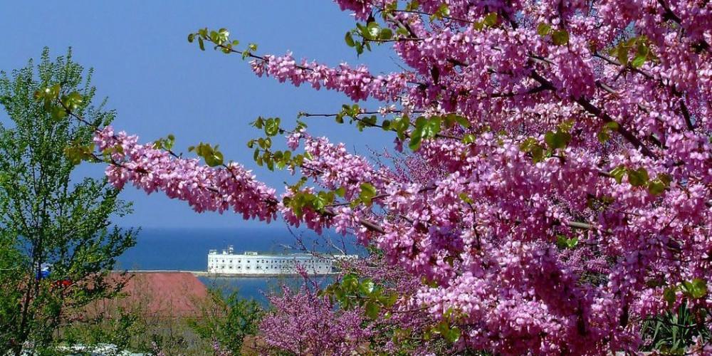 Цветущая весна в Крыму!